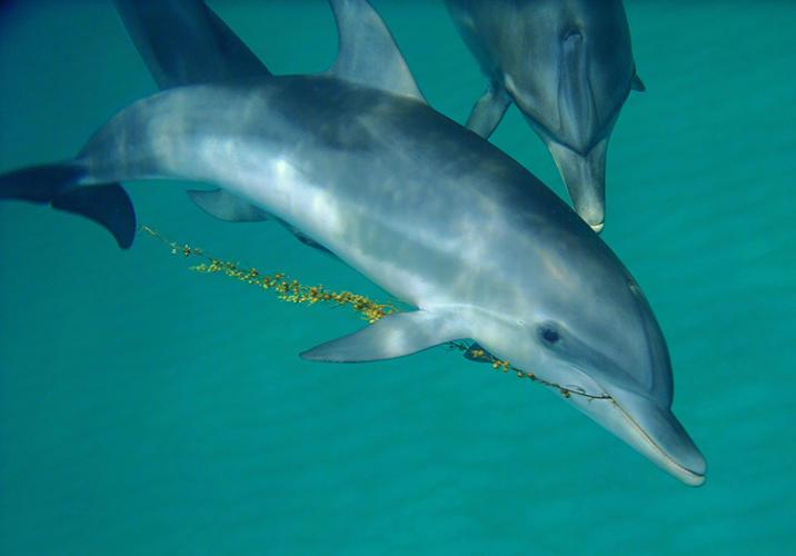 3028931-slide-s-dolphin-03