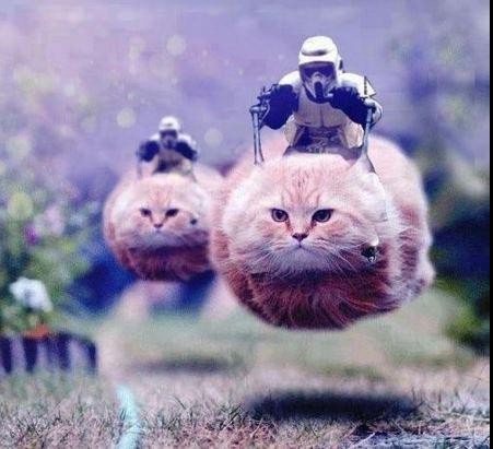 Ezért lepték el macskák a Twittert a hétvégén