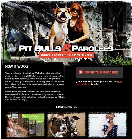 jb-pitbulls-photo-contest